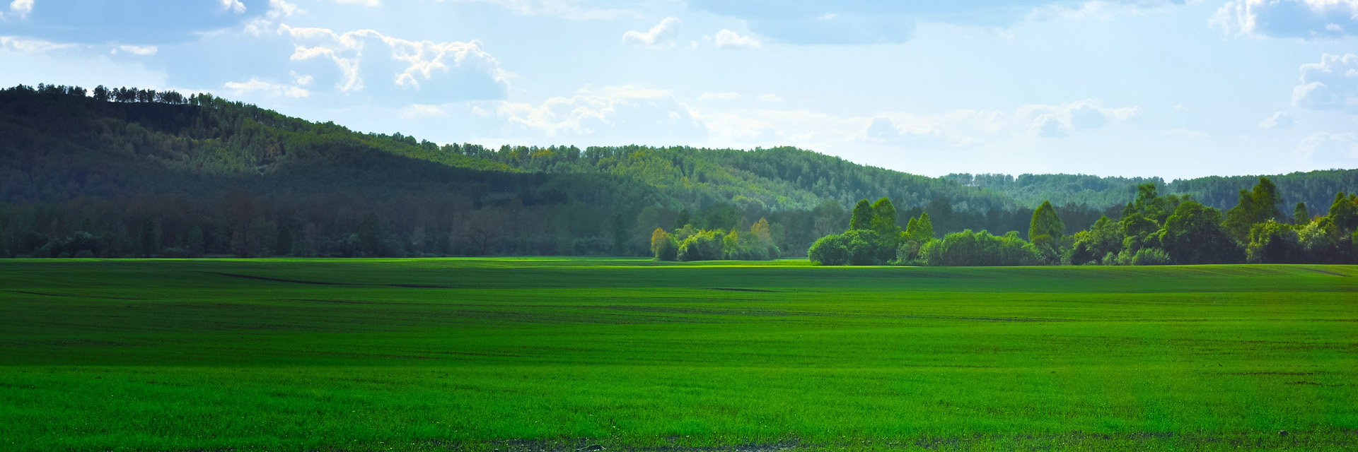 green_fields